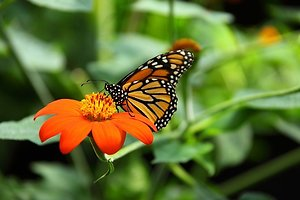Home. Butterfly on ORANGE flower